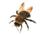 Bees & Wasps