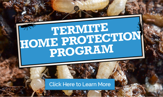 Termite Monitoring Program