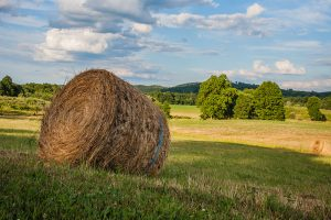 Sussex County NJ is well known for its many farms