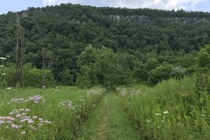 A quiet path in Pike County