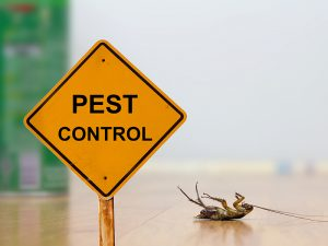 Pest Control sign next to dead bed bug